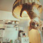 Мощная японская реклама: GRAVITY CAT (Летающий котенок)