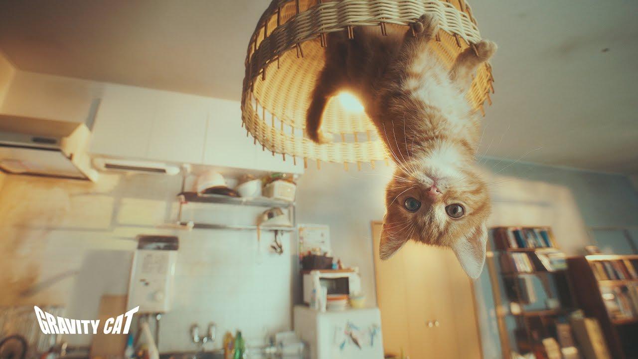 Мощная японская реклама: GRAVITY CAT | Студия Ракета