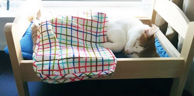 IKEA подарила приюту для животных кроватки для котов | Студия Ракета